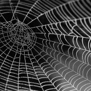 spider web with light shining on it